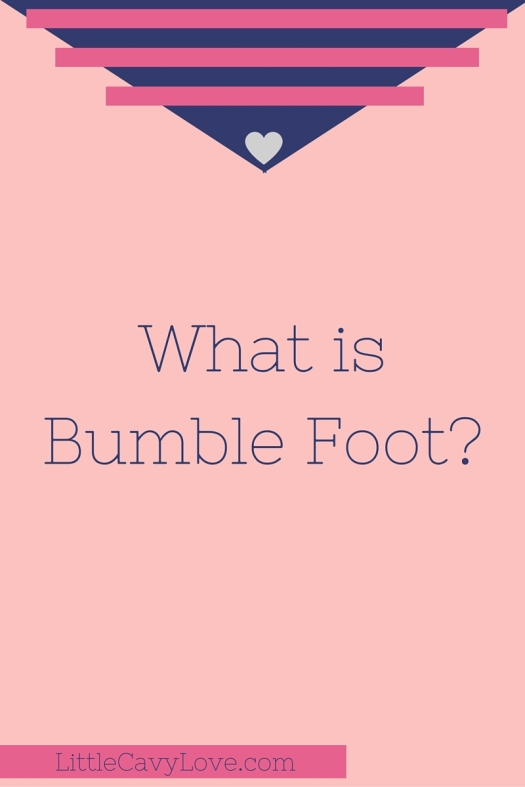What_is_Bumble_Foot