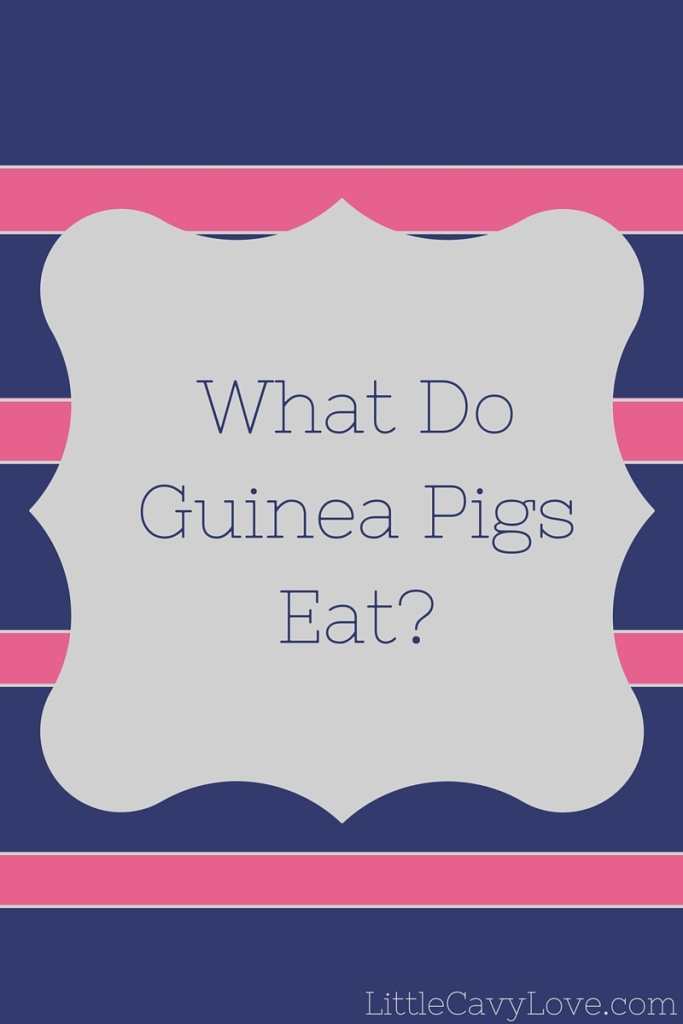 What_Do_Guinea_Pigs_Eat