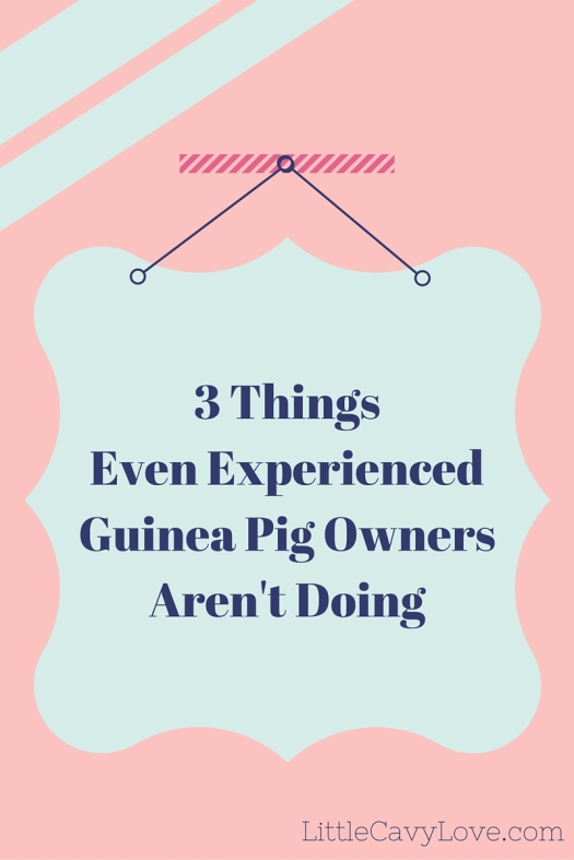 3 Things Even Experienced Guinea Pig Owners Aren't Doing