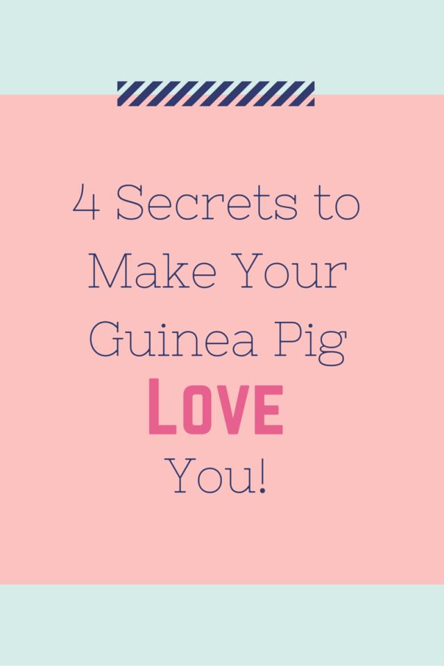 4 Secrets to Make Your Guinea Pig Love You!