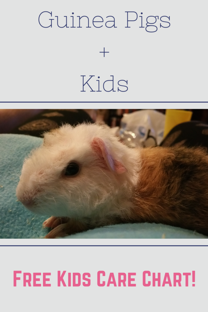 Guinea Pigs and Kids