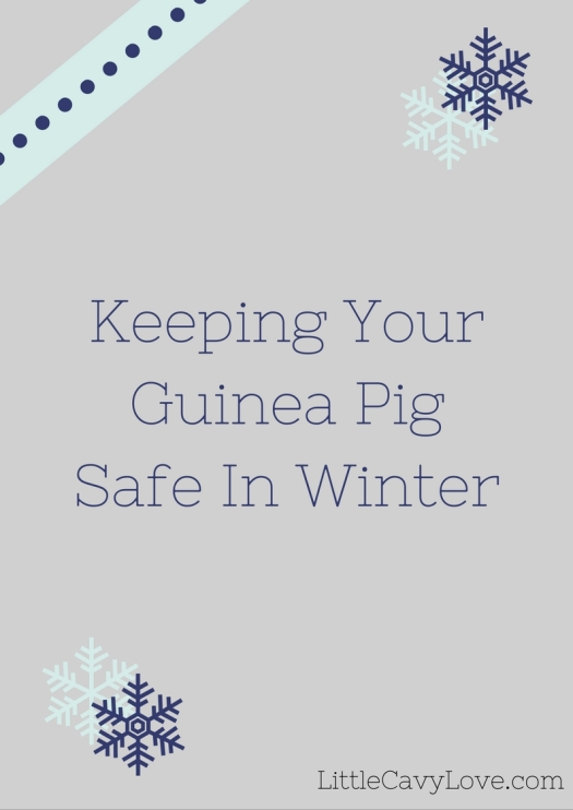 Keeping Your Guinea Pig Safe In Winter - LittleCavyLove.com